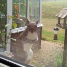 Inquisitive Squirrel