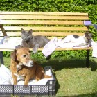 Our dogs and cat relaxing at The Glebe House